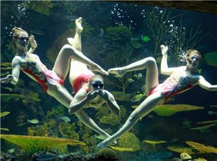 """海洋乐园里的异国""""美人鱼"""""""