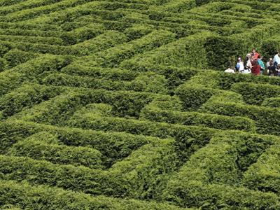 实拍西班牙最大灌木迷宫迷失于柏树迷阵