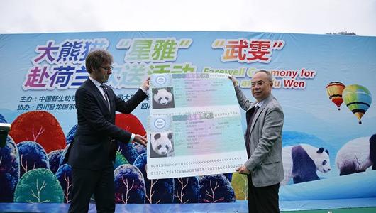 """荷兰喜迎中国国宝 """"熊猫外交""""连接中国与世界"""