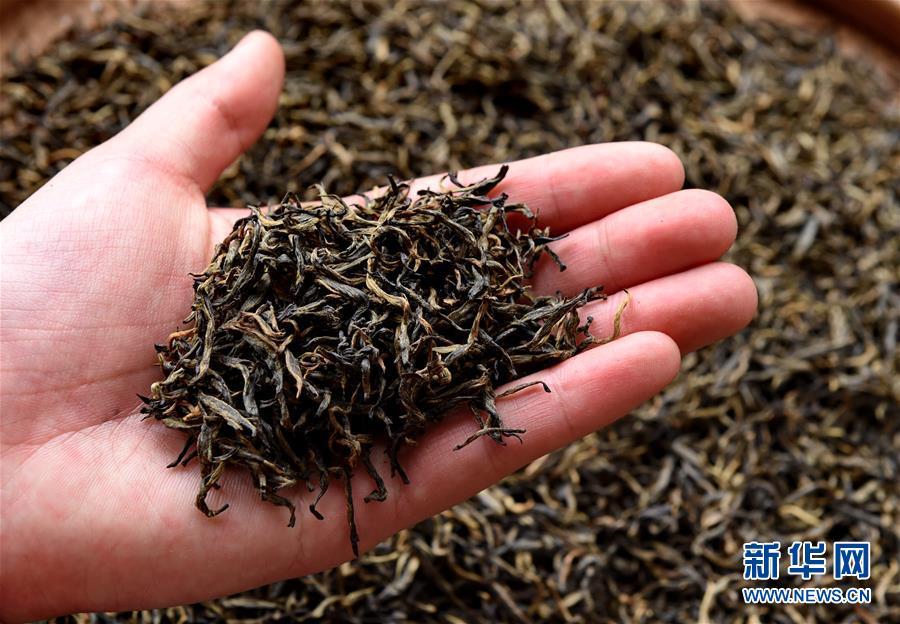 一带一路·好味道|探秘武夷红茶——'金骏眉'