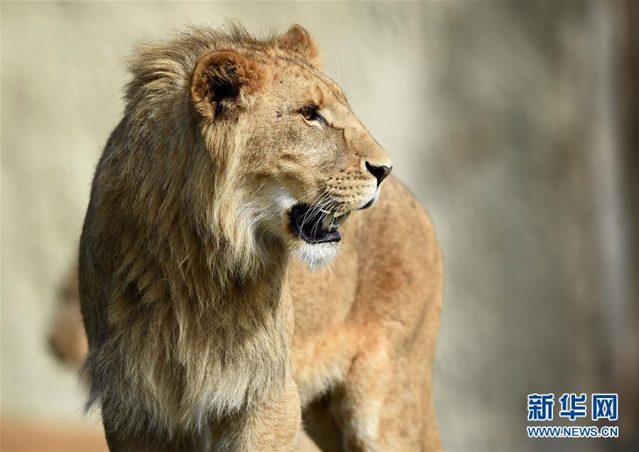 法国博瓦尔动物园[组图]_图片中国_中国网