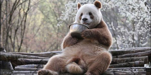 陕西佛坪:熊猫灵动 田园优美