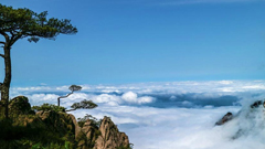 """黄山""""谷雨""""后现壮观云海"""