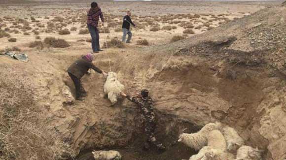 甘肃肃北羊群被困深坑 边防官兵肩扛解救