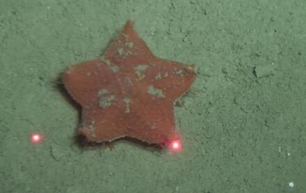 蛟龙号第5次下潜完成1.8公里高精度测深侧扫调查