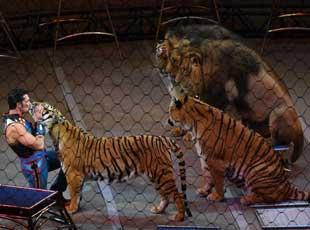 动物保护组织多年抗议 美国百年马戏团谢幕