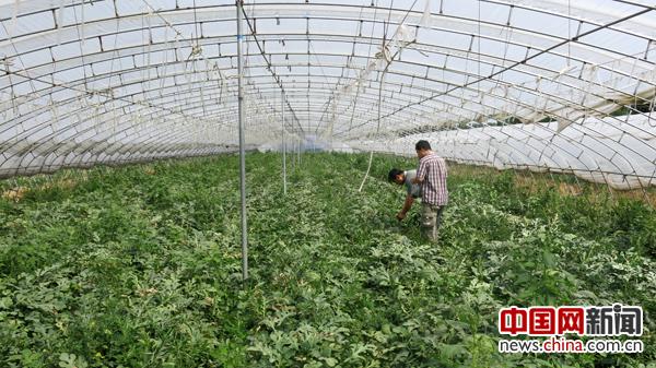 土壤改良技术_中国开发推广土壤改良技术 果蔬作物产量将提高10-30%_新闻中心 ...