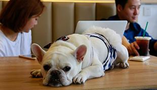 杭州有家咖啡店 专为宠物开设