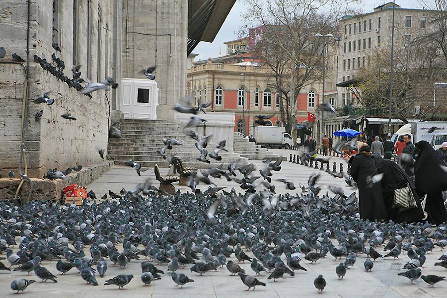 耶尼清真寺外的鴿群