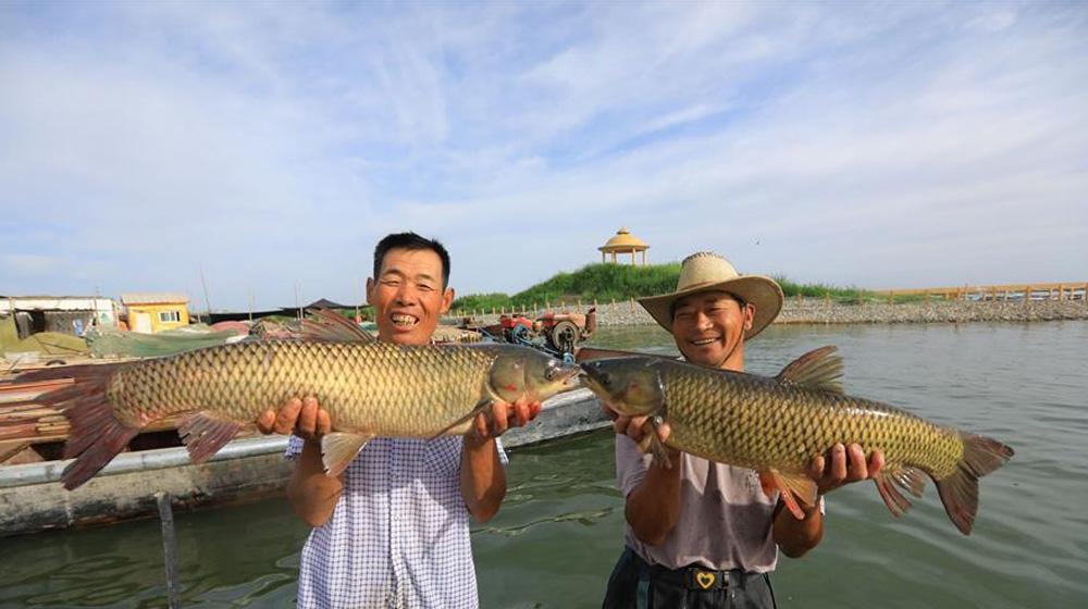 博斯騰湖漁民大豐收