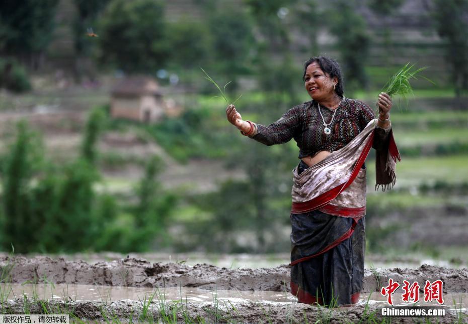 """当地农民在泥浆中玩耍,庆祝尼泊尔""""水稻日""""。"""
