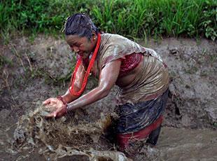 尼泊爾迎來'水稻日'