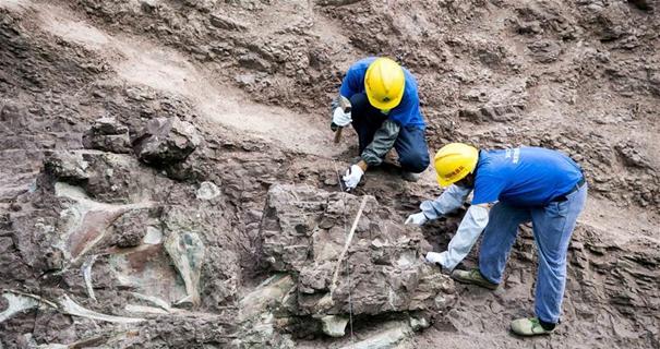 重庆云阳发现世界级恐龙化石群(组图)
