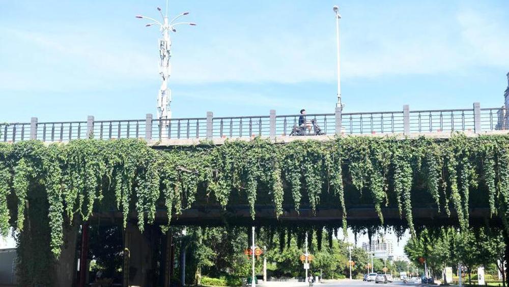 """福州立交桥披""""绿装"""""""