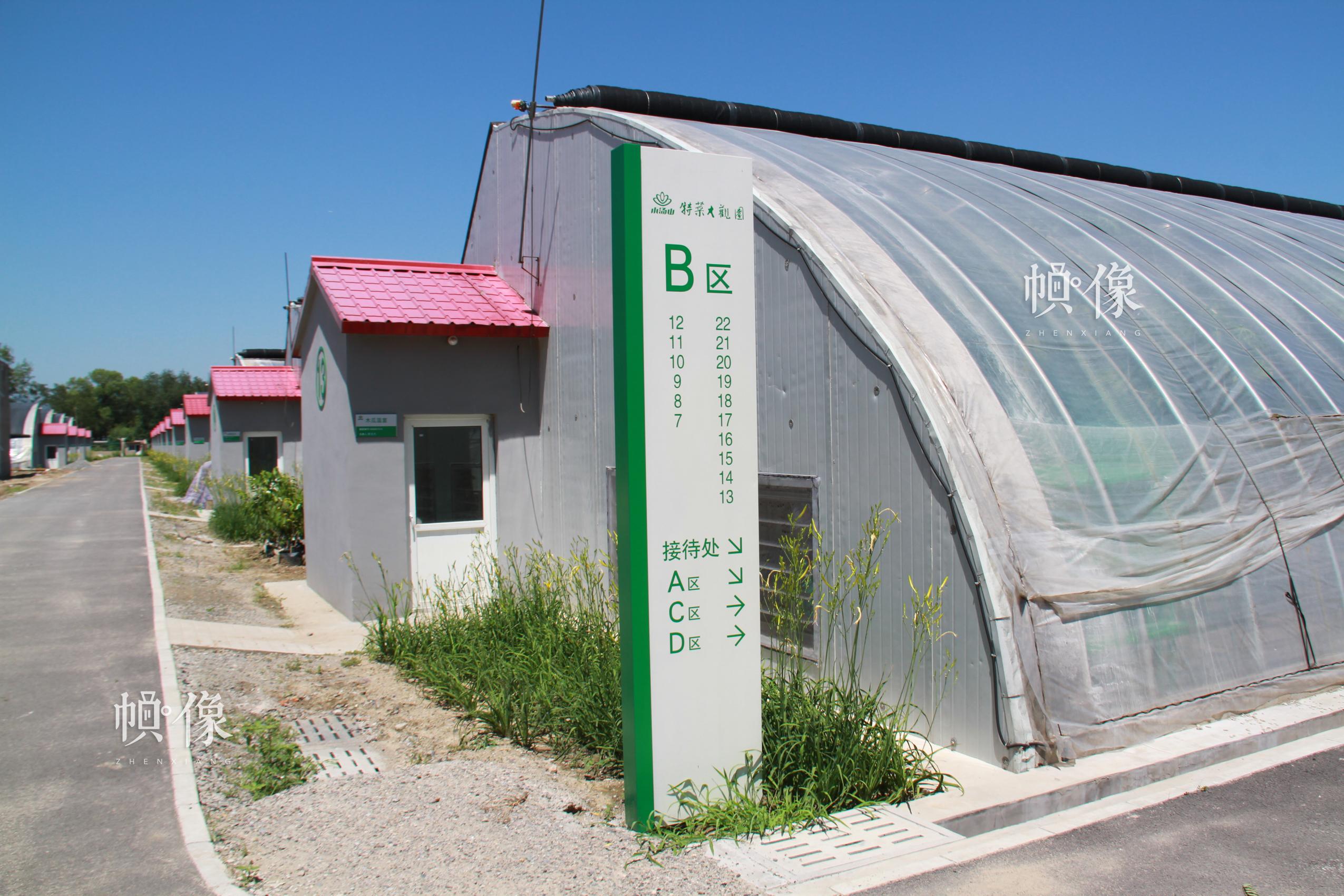 图为北京天安农业小汤山特菜基地蔬菜大棚。中国网记者 赵超 摄