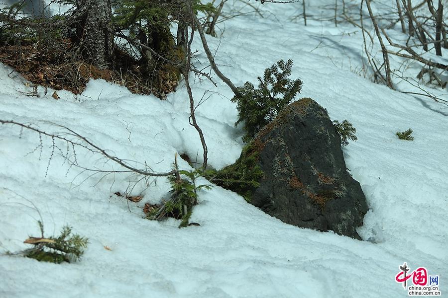 三合目路边的积雪