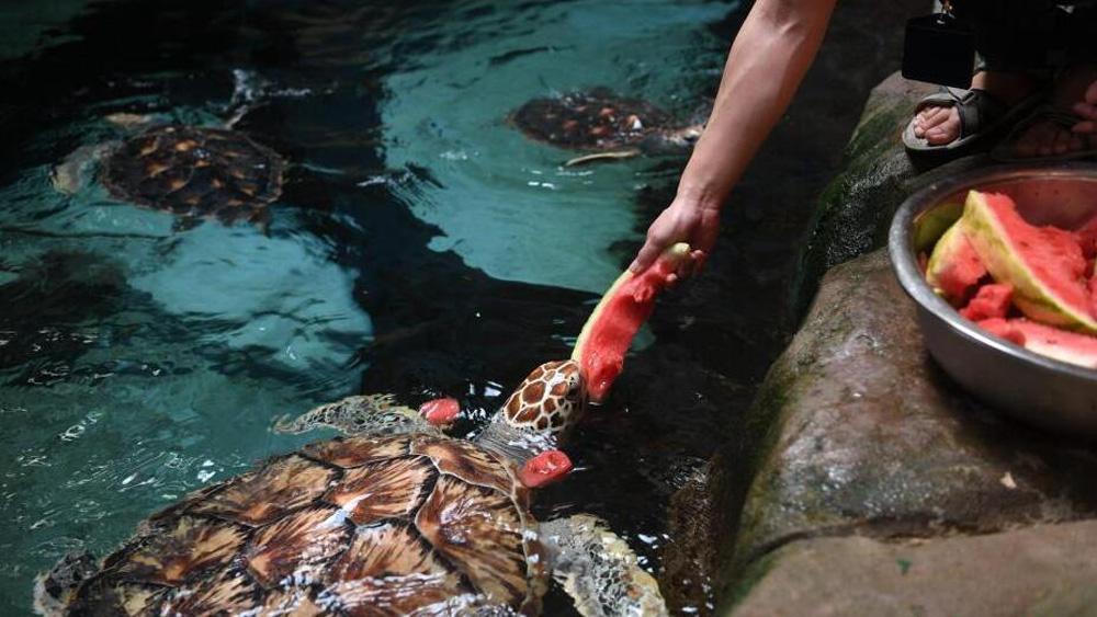 """海洋动物的""""高温福利"""" 海龟吃西瓜海豚吃果冻"""