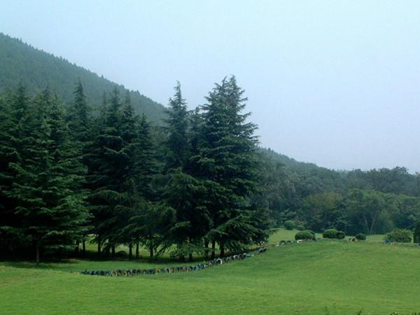 徐州泉山森林公园