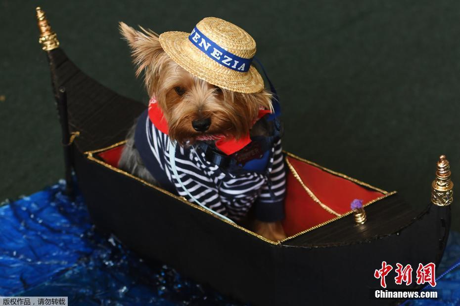萨尔瓦多举行狗狗服装大赛 狗狗秒变时尚icon萌翻