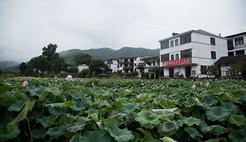 江西太平镇以生态为根基 打造旅游产业闭环