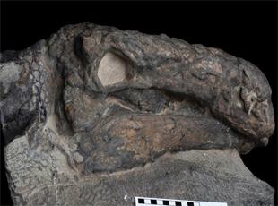 加拿大博物馆复原1.1亿年前多刺甲龙