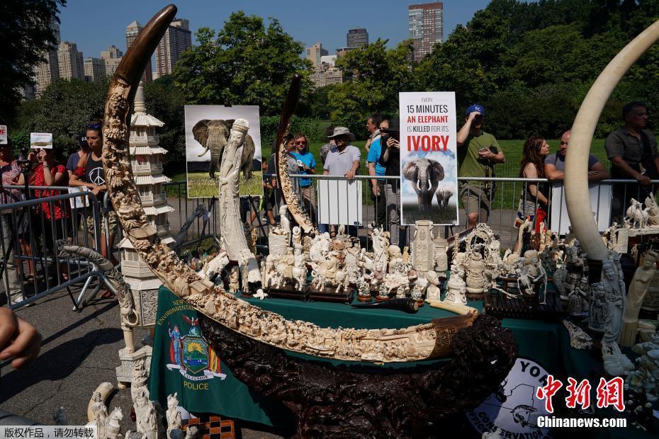 美國銷毀近2噸非法象牙製品 價值超800萬美元