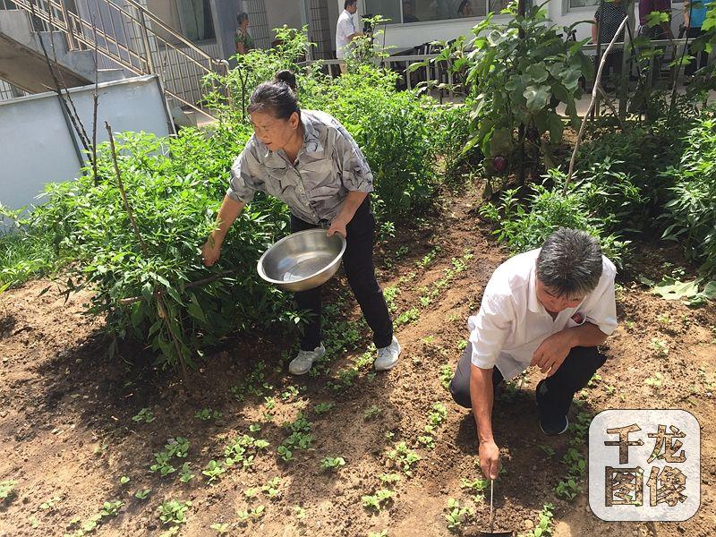 """农家院的主人是57岁的村民吴贺云,三年前还是低收入户的她,如今靠着自己的农家院和一桌桌美味的""""栗子宴"""",年收入达十七八万,日子过得十分红火。图为吴贺云和家人在拾掇农家院里的小菜园。千龙网记者 薄晨棣摄"""