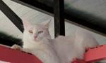 """土耳其""""国猫""""的幸福生活"""