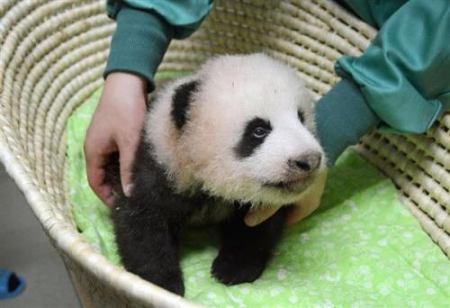 来源:东京动物园协会