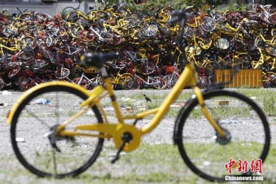 8月22日,在上海静安区某违停非机动车堆放现场,上万辆各种颜色的共享单车被摆放的密密麻麻,野生植物无人打扰随意生长,从空中俯瞰场面壮观。 张亨伟 摄
