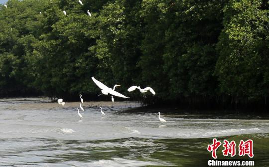 """旅游名城三亚大力修复生态引来""""候鸟纷飞"""""""