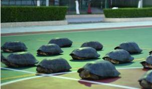 广西防城港边防查获18只亚洲巨龟(图)