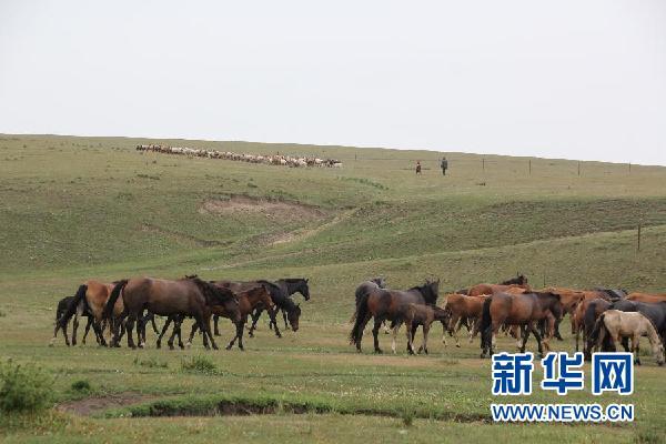 """羊群和马群在伊犁哈萨克自治州昭苏县的草原上吃草(8月23日摄)。党的十八大将生态文明建设纳入中国特色社会主义事业""""五位一体""""总体布局,西北地区作为传统的草原牧区和沙漠集中分布地区,近年来退牧还草、防沙治沙、植树造林等举措推动了生态环境的恢复,更促使西北走出一条区别于高耗能、高污染经济发展路线的新路径,成为绿色发展的探路者。新华社记者马卓言 摄"""