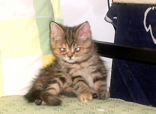 五年前:家有肥猫