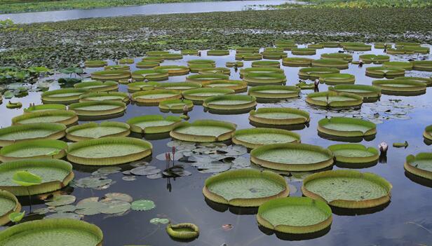 """靠水吃水 遂宁利用""""城市之肾""""做大绿色经济"""