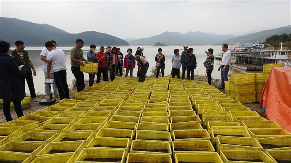 吉林市百余市民众筹购买5500余斤活鱼放生