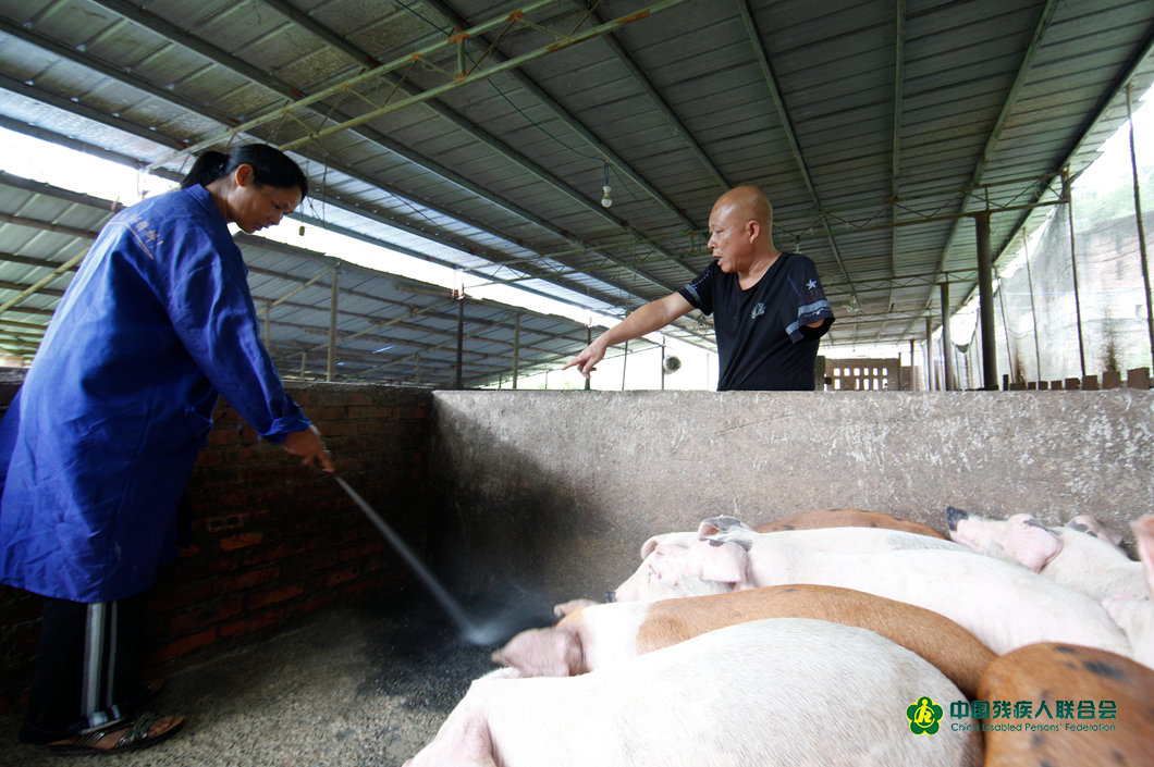 熊本超在指導工人為豬圈做清潔 秦啟勝攝