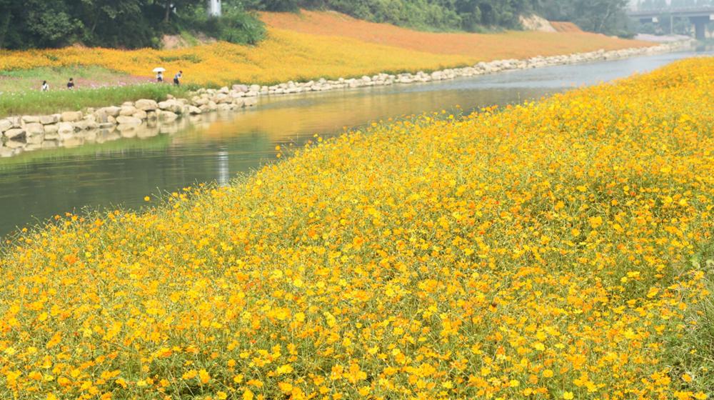 遠離熱鬧景區 去杭州郊區看花海