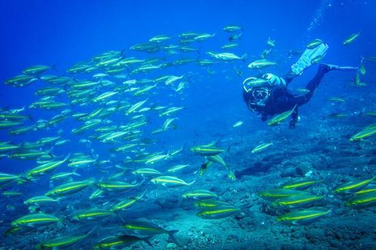 2016年9月11日,一名潜水爱好者在印度尼西亚巴厘岛海域潜水(水下摄影)。 新华社记者杜宇摄