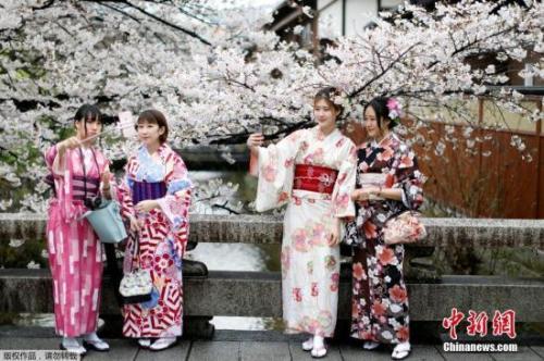 资料图:当地时间4月7日,日本京都樱花盛放,民众身着和服赏樱。