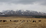 初冬美丽的昭苏大草原 清爽的空气带来内心的宁静