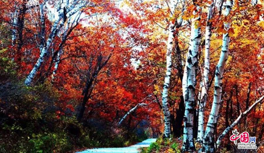 漫山红叶 美了祖山 醉了秋(图文)