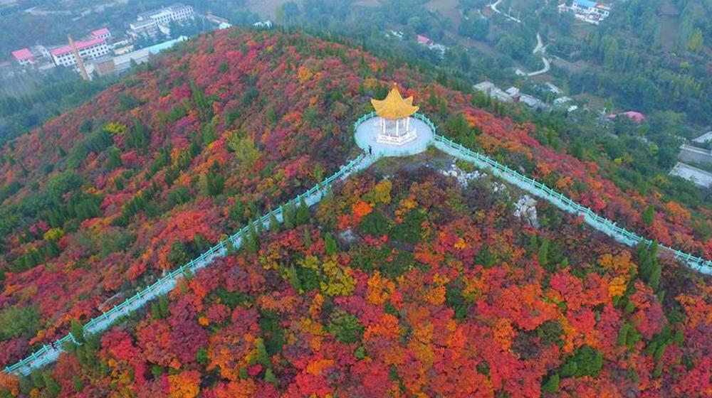 河南巩义山区红叶遍布山野 成美丽风景线