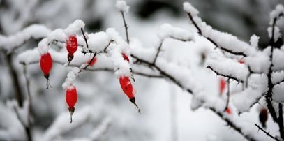达古雪韵 秋天在达古遇到雪(组图)