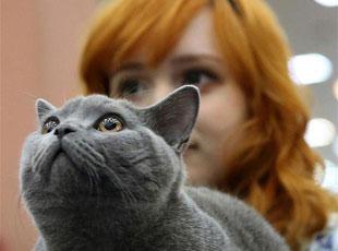 国际猫咪选秀赛开幕