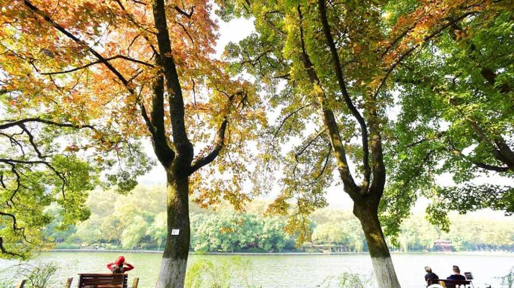 杭州:多彩秋色悄悄来临