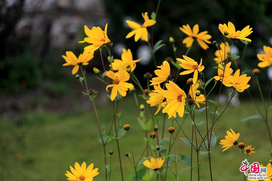 阿黛尔小镇的花朵