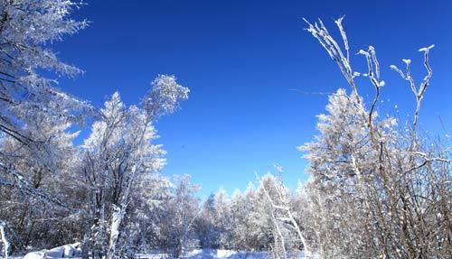 内蒙古:阿尔山雾凇美景如仙境