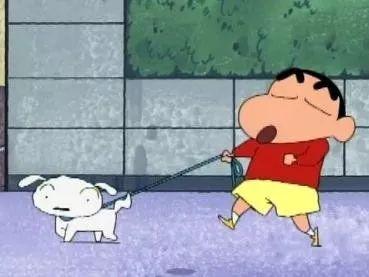 ▲在日本动画片《蜡笔小新》中,小新每次上街遛狗都会拴绳、捡便便。