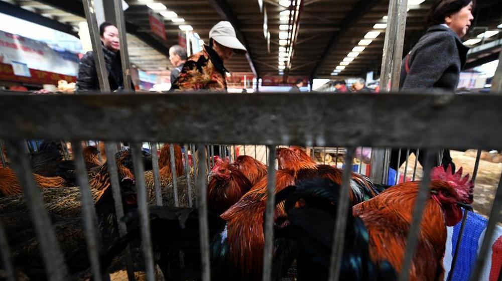 云南省确诊1例H7N9病例 活禽市场未受影响